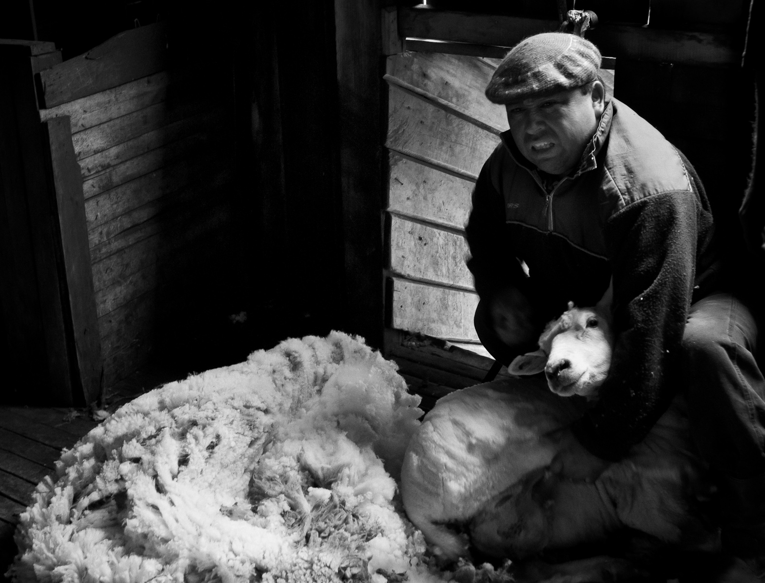Sheep shearer demonstrates his craft, Estancias de las Hijas, Argentina