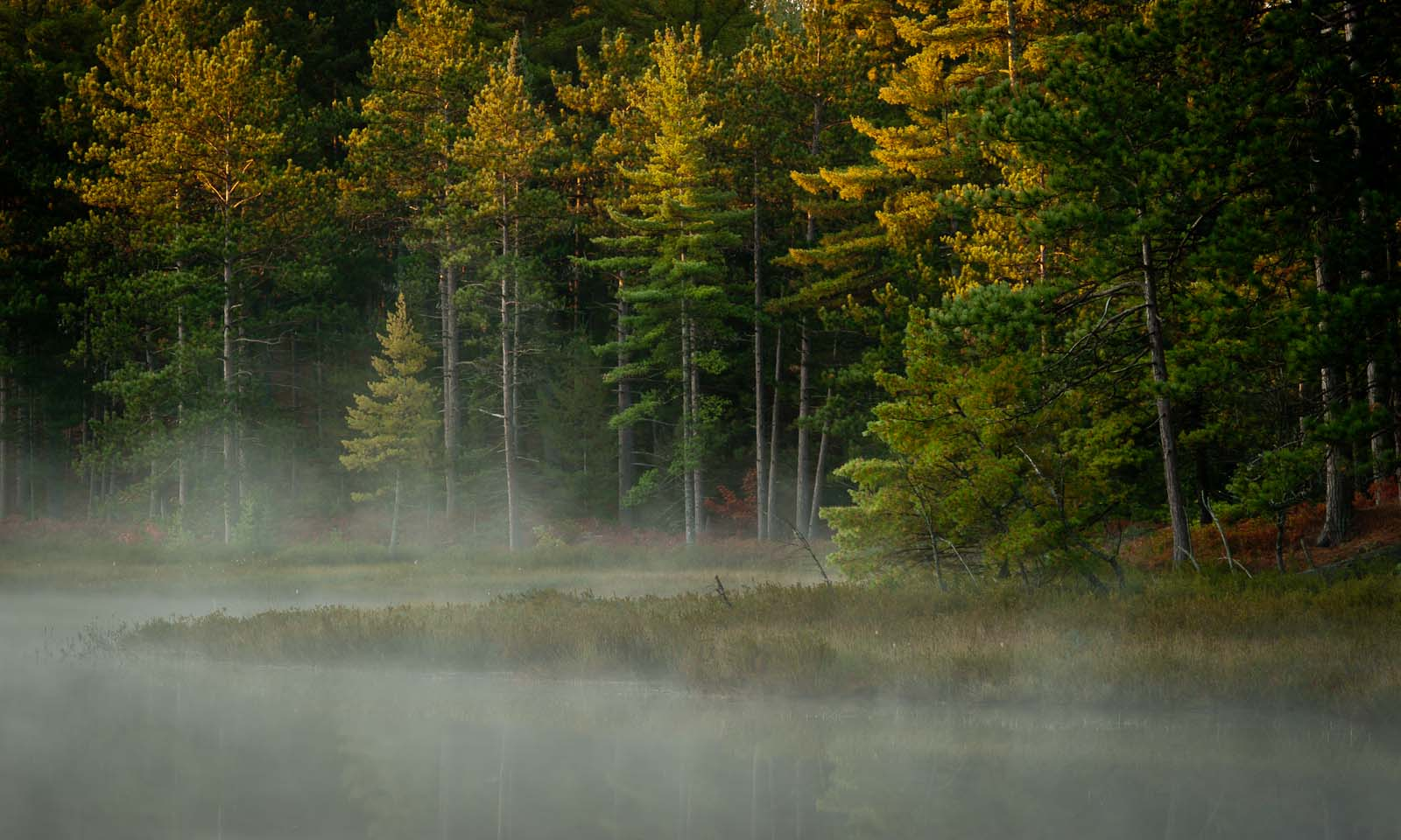 Morning mist on Cabin Lake