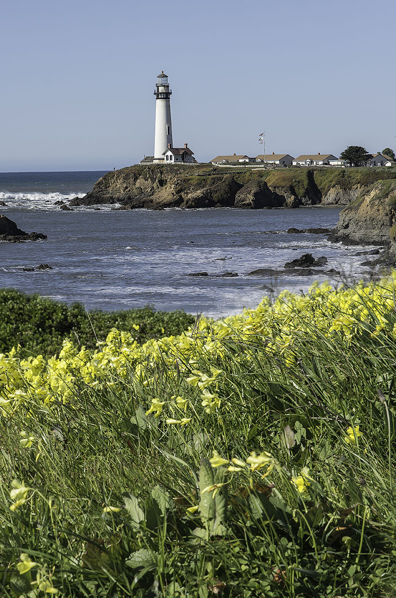 Lighthouse and Mustard
