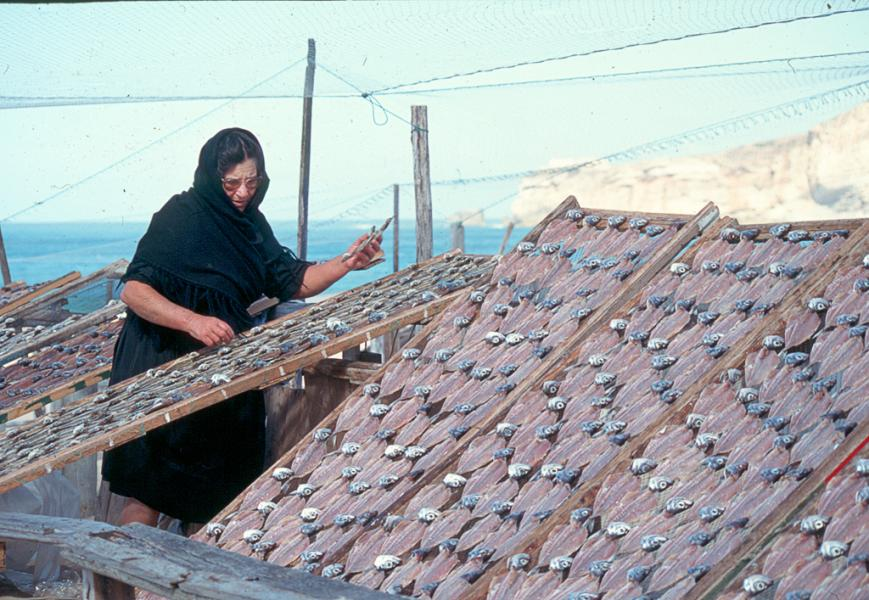 Widow tends to her fish drying on the Beach at Nazare' Portugal