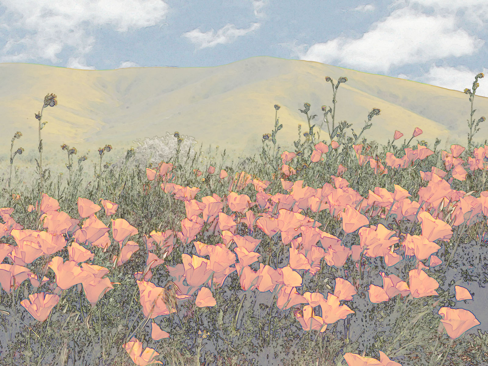 Stylized Poppy Field