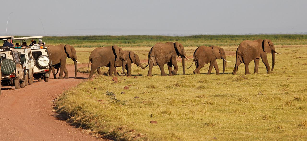 Elephants Get Right of Way-Tanzania, Africa