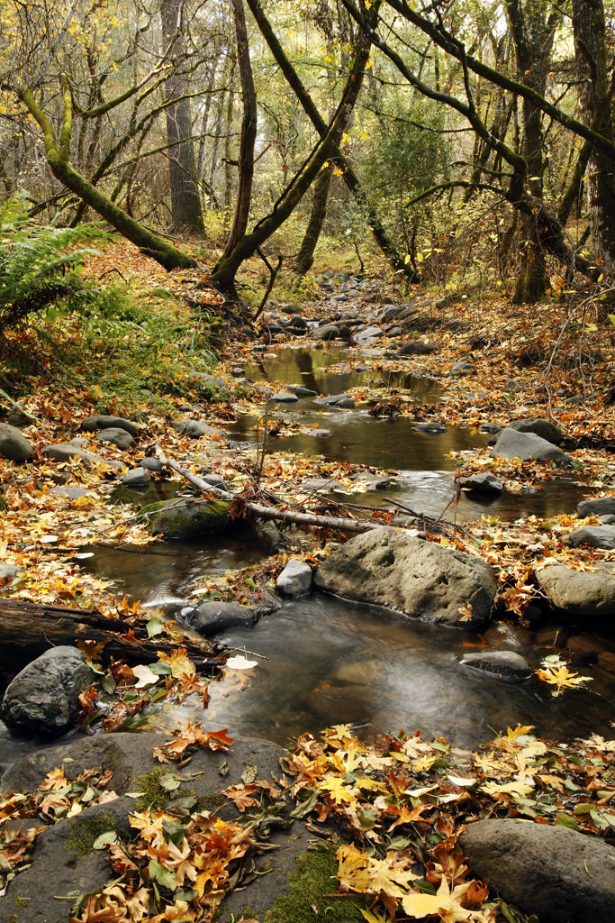 Fall Colors at Richie Creek, Bothe Napa State Park