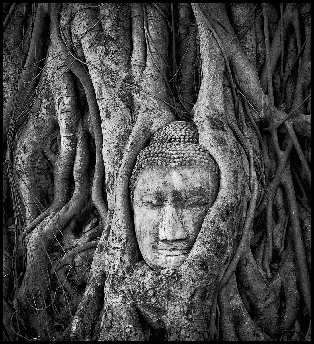 Buddha in banyan roots