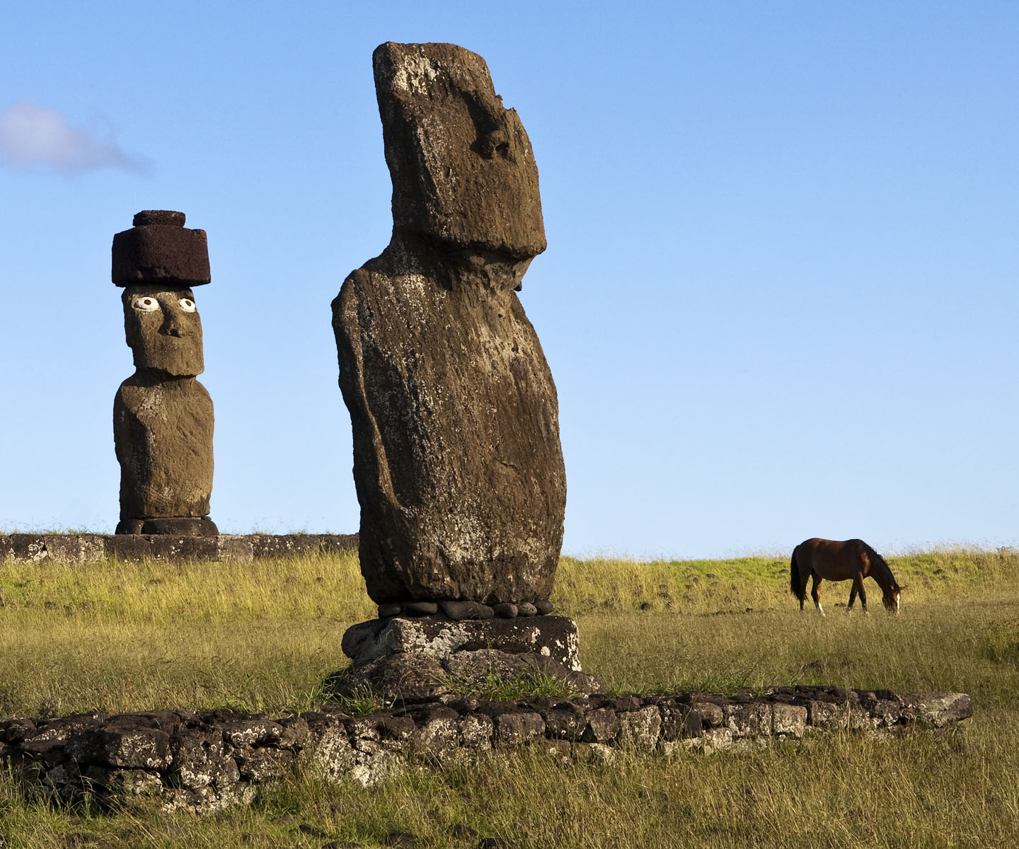 Grazing Horse Illustrates Size of Moais, Easter Island