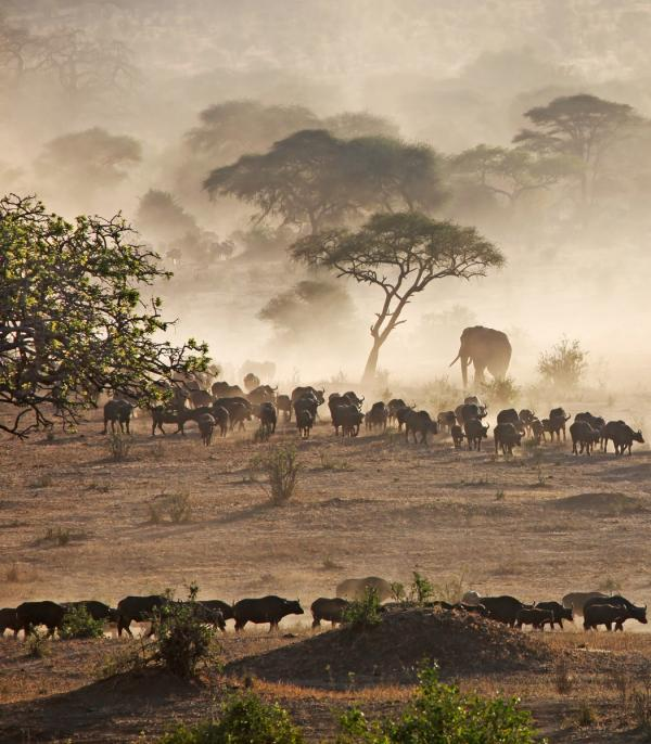 Migration on African Plains, Tanzania
