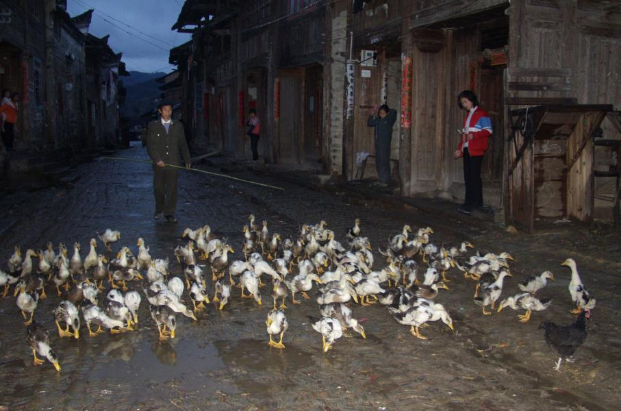 Taking the ducks to the pond while girls freshing up at the front door in the morning, QuaiZhou, Chi