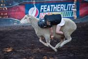 Little Girl Hangs on in Sheep Riding Rodeo at Alameda County Fair