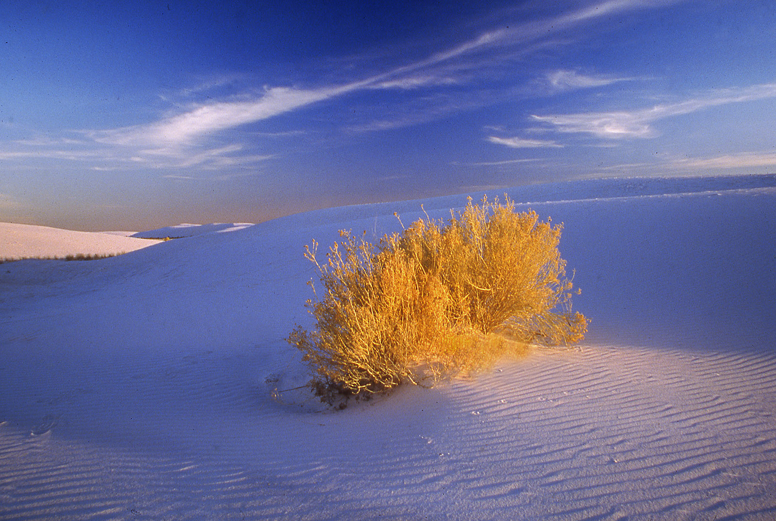A Splash of Light at White Sands, New Mexico
